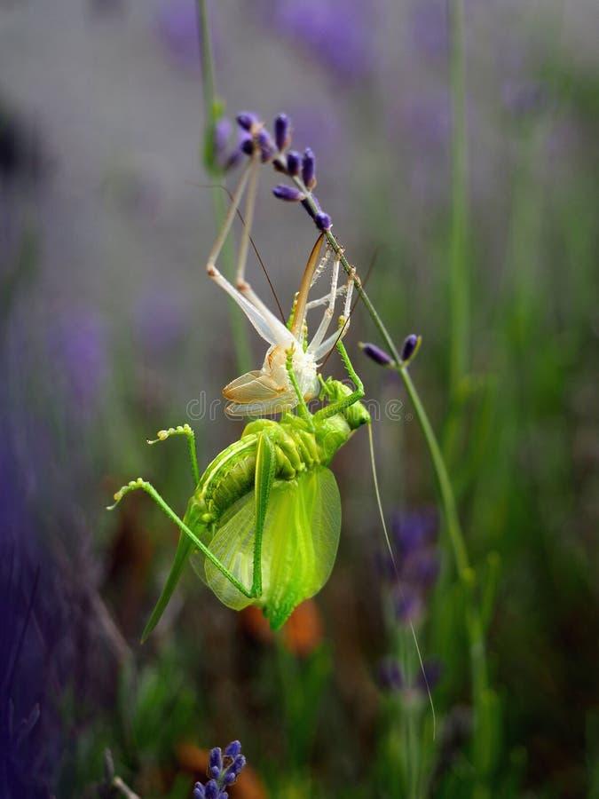 Alfombra verde hecha de la naturaleza y de plantas imagen de archivo libre de regalías