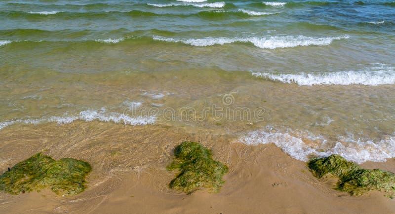 Algáceo, floraciones de las algas en Sunny Beach en la costa del Mar Negro de Bulgaria foto de archivo