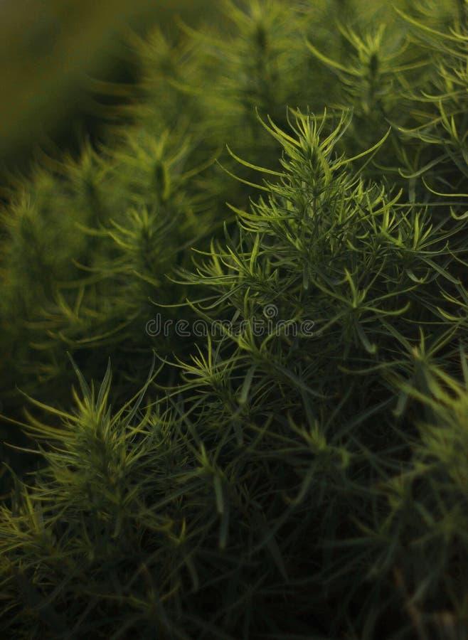 Algún arbusto fotografía de archivo libre de regalías