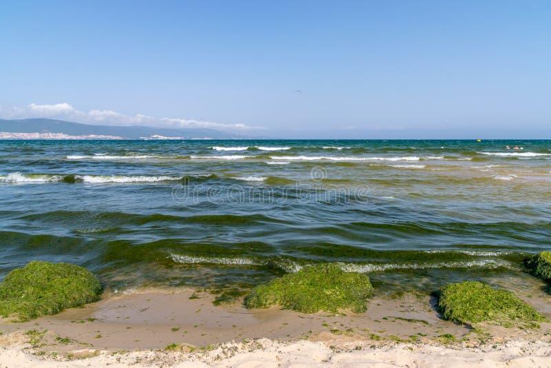 Alg?ceo, floraciones de las algas en Sunny Beach en la costa del Mar Negro de Bulgaria imagen de archivo libre de regalías