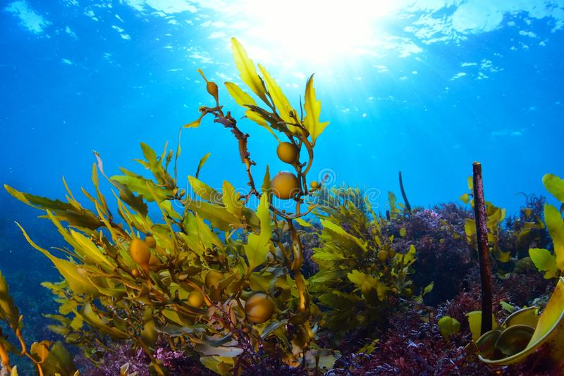 alga immagine stock