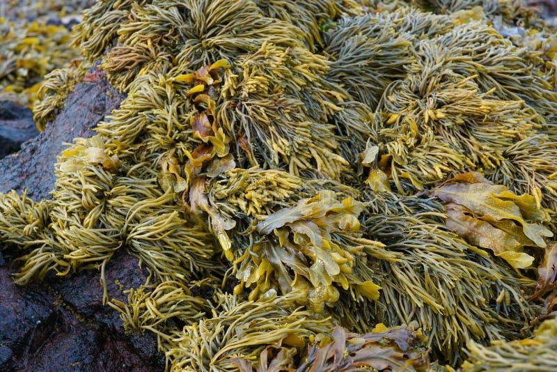 alga fotografia stock libera da diritti