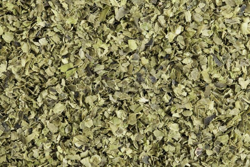 Alga da alface de mar fotografia de stock