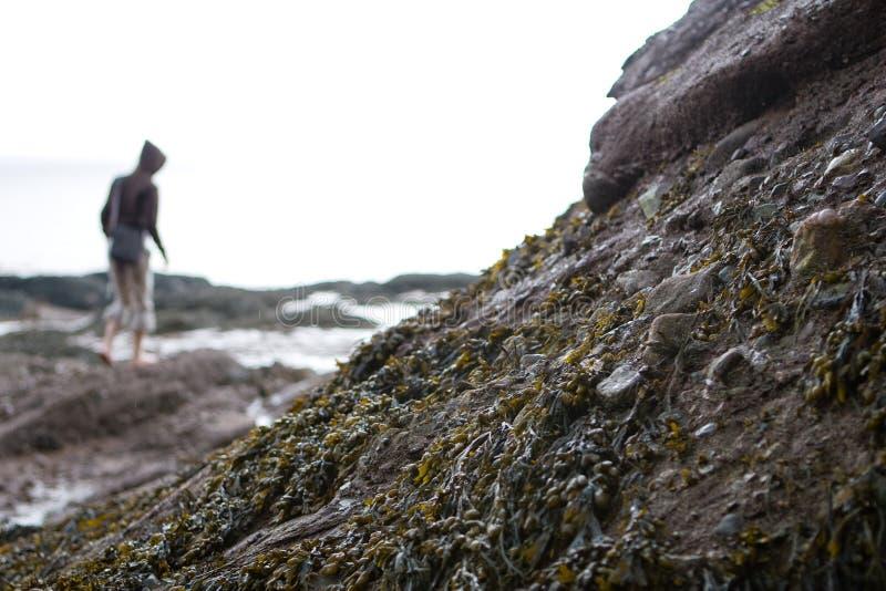 Alga da baixa maré imagem de stock