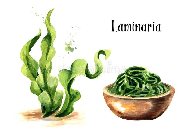 Alga del fuco di Laminaria Insieme di Superfood Illustrazione disegnata a mano dell'acquerello isolata su fondo bianco illustrazione vettoriale
