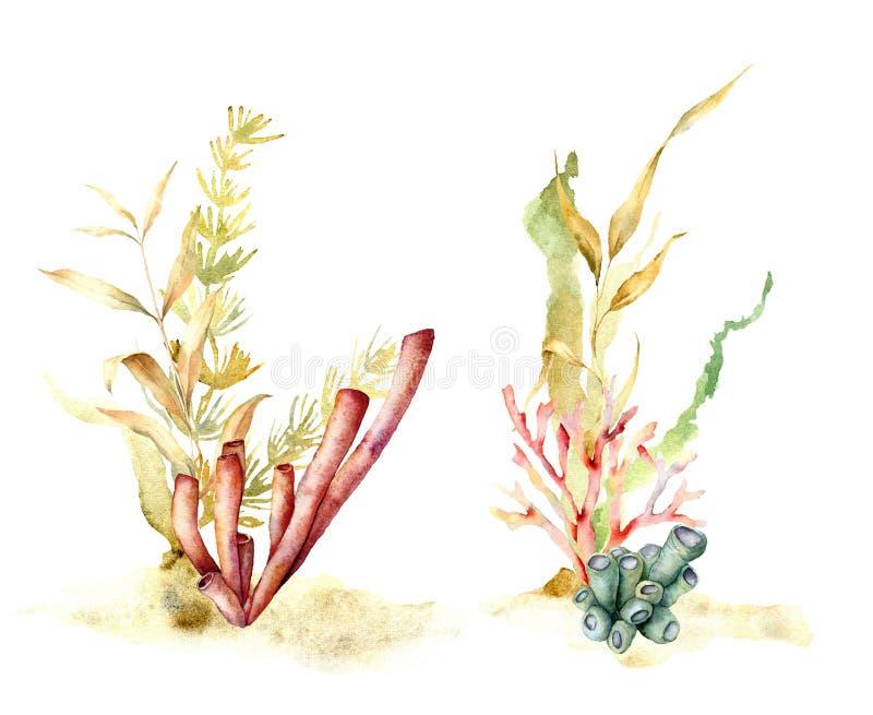 Alga dell'acquerello messa con i rami di laminaria Illustrazione floreale subacquea dipinta a mano con le foglie ed il corallo de illustrazione di stock