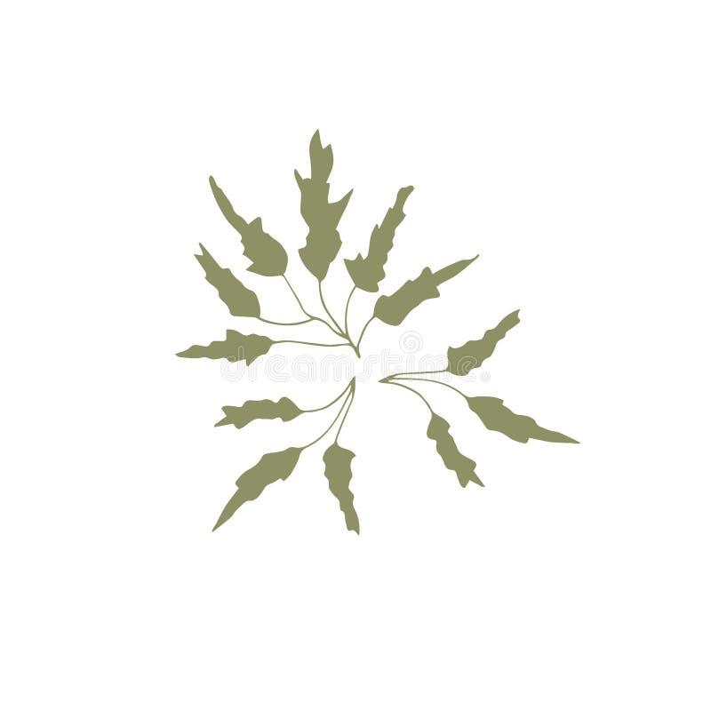Alga disegnata a mano di vettore illustrazione di stock