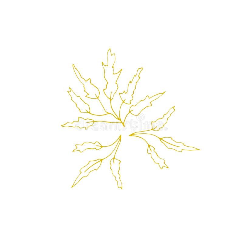 Alga disegnata a mano di vettore royalty illustrazione gratis