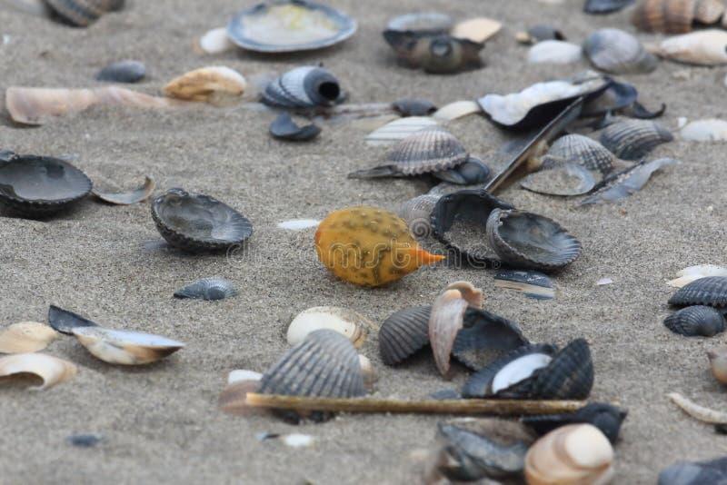 Alga e coperture sulla spiaggia fotografie stock libere da diritti
