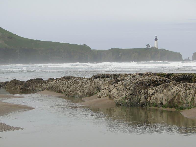Alga e kelp sulle rocce della spiaggia fotografie stock