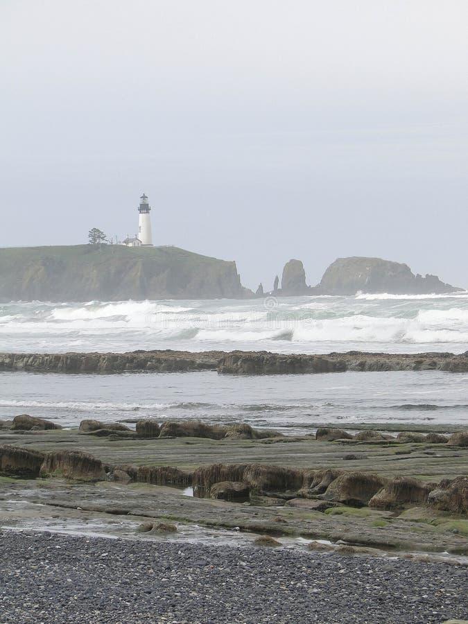 Alga e kelp sulle rocce della spiaggia immagini stock