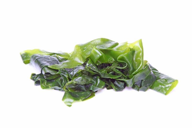 Alga em um fundo branco imagem de stock