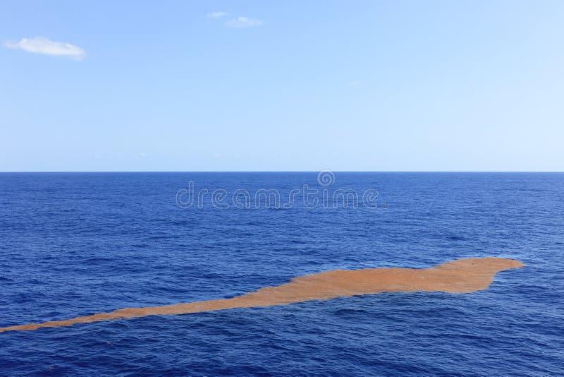 Alga marina que flota mediados de Atlántico foto de archivo