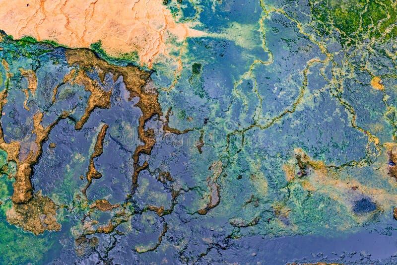 Alga marina y bacterias imagen de archivo