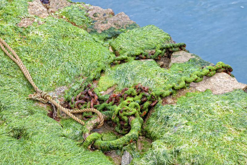 Alga marina y encadenamientos oxidados fotos de archivo libres de regalías