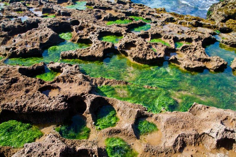 alga nadmorski fotografia stock