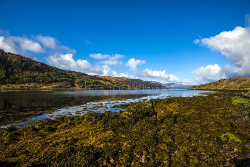 A alga notável e extensiva deposita no Loch Sunart nas montanhas de Escócia fotografia de stock royalty free