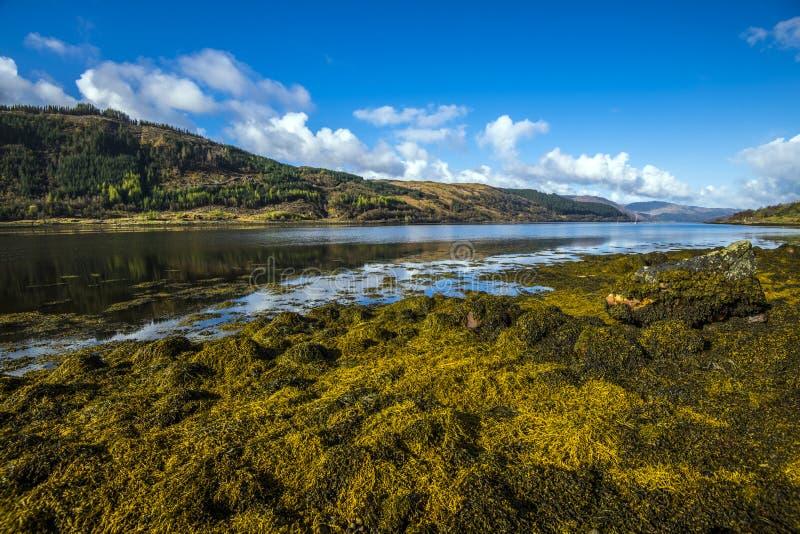 A alga notável e extensiva deposita no Loch Sunart nas montanhas de Escócia imagem de stock royalty free