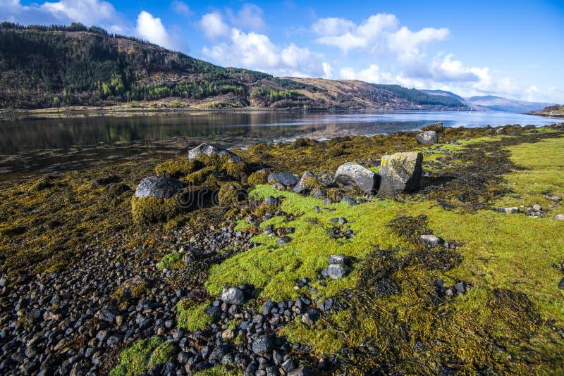 A alga notável e extensiva deposita no Loch Sunart nas montanhas de Escócia fotos de stock royalty free