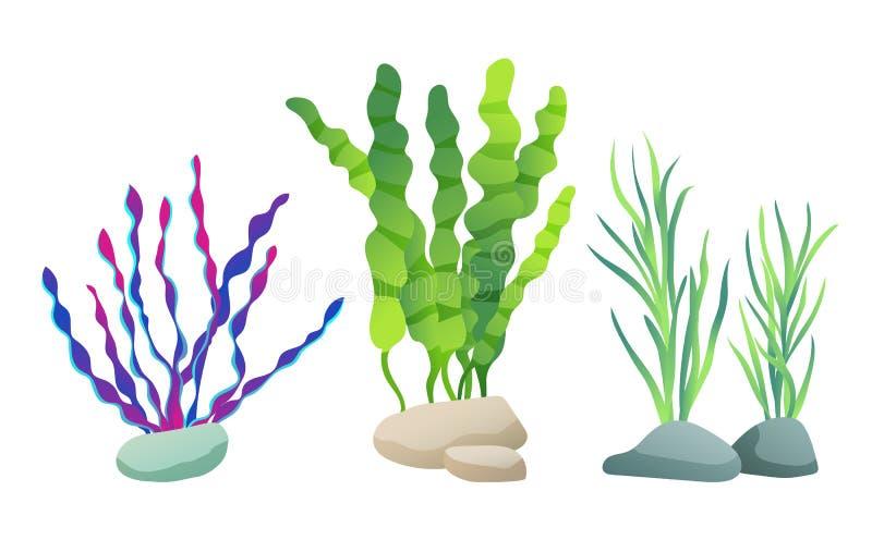 Alga per l'illustrazione di vettore di schizzo dell'acquario royalty illustrazione gratis