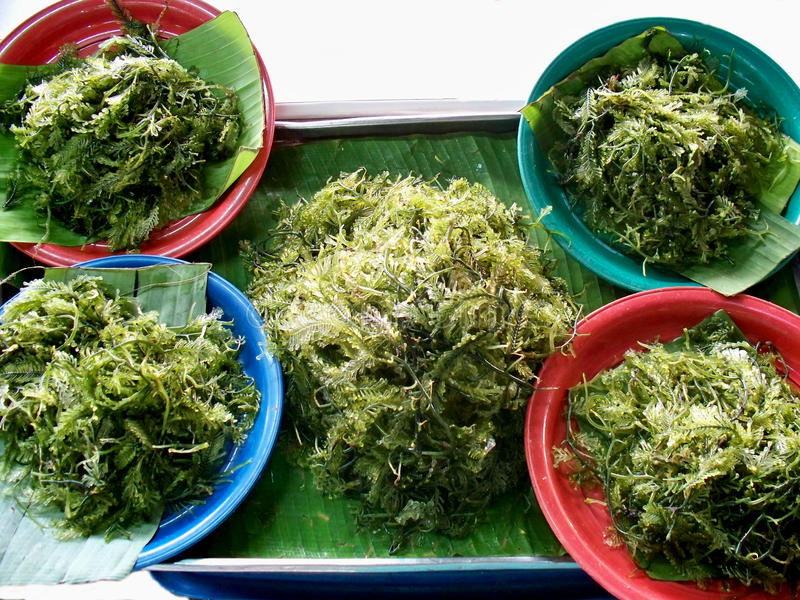 Alga verde fotografia stock libera da diritti