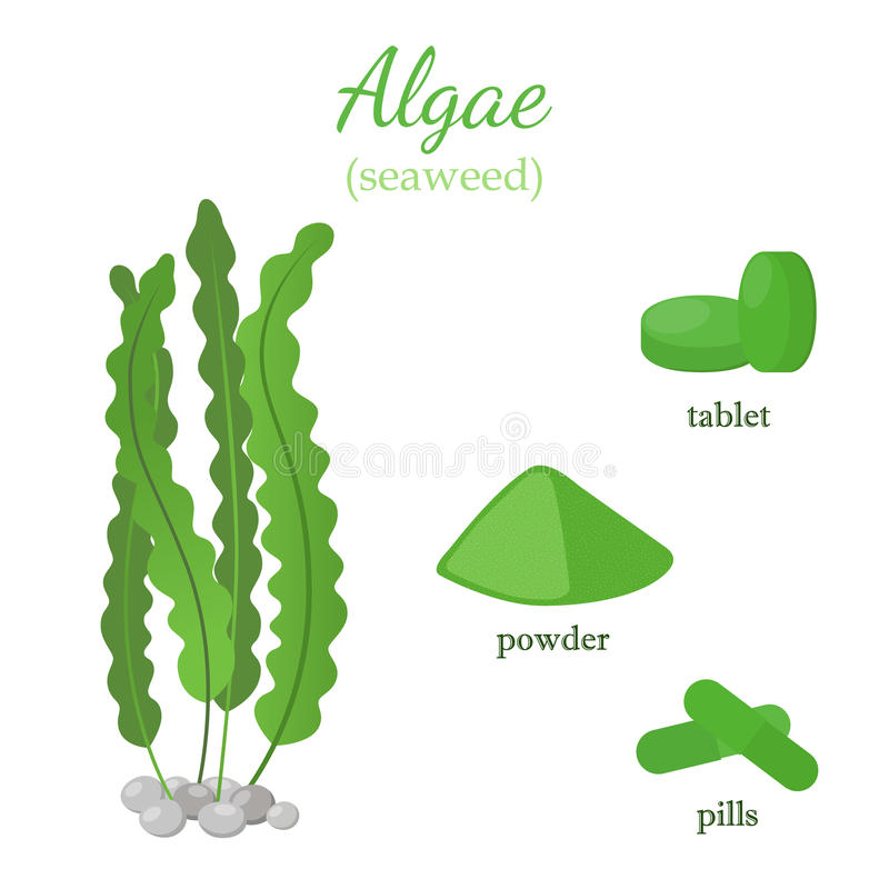 Alga verde - spirulina sano, alghe Stile piano del fumetto illustrazione vettoriale