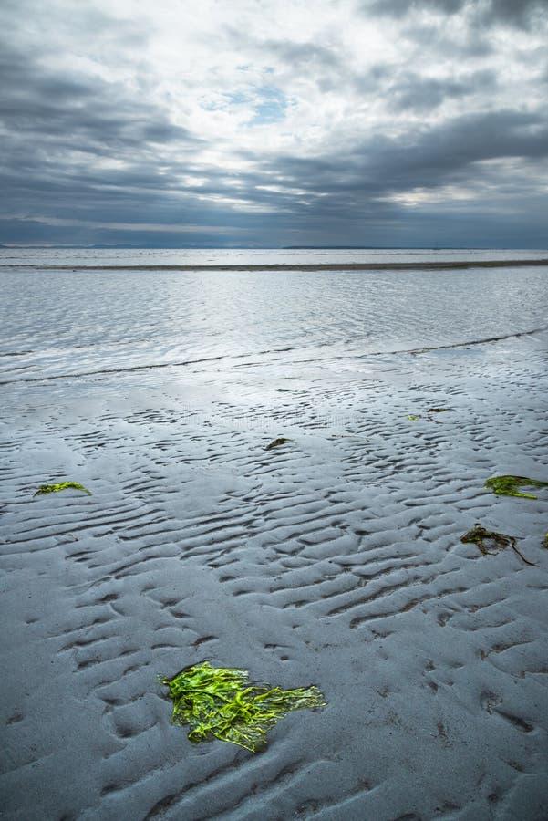 Alga verde sulla spiaggia a bassa marea con le nuvole di tempesta scure in cielo nella sera ed in oceano Pacifico nella distanza immagine stock