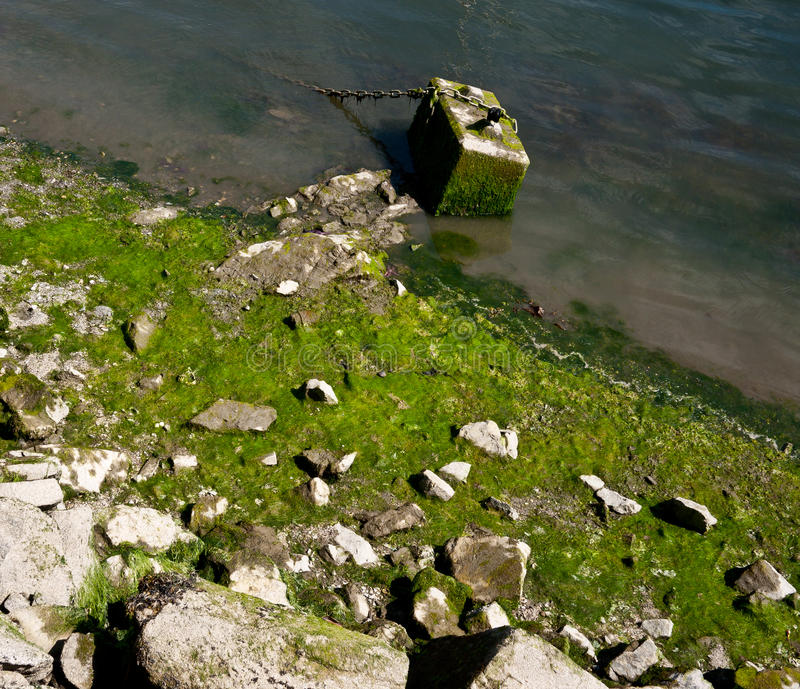 Download Algae stock photo. Image of shore, scum, coastal, green - 15089630