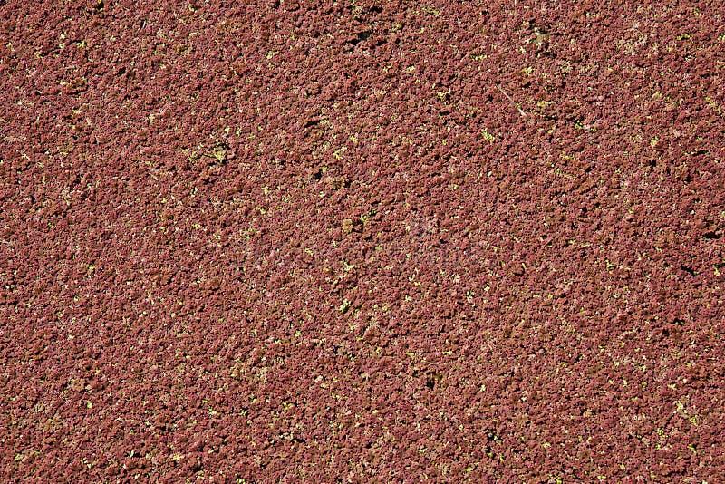 Download Algae stock photo. Image of algae, view, grow, nature - 22569674