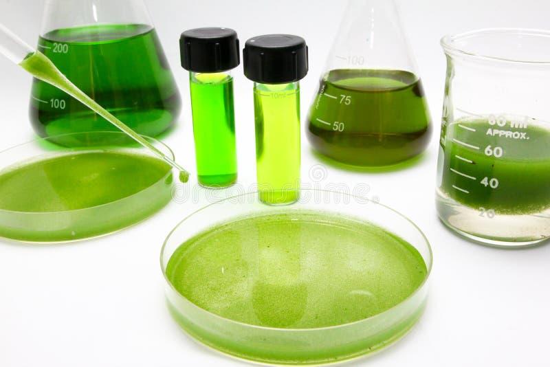 Algae biofuel. Concept of deriving biofuel from algae royalty free stock images