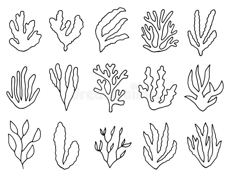 Algae outline isolated plants. linear drawing set of objects.  stock illustration