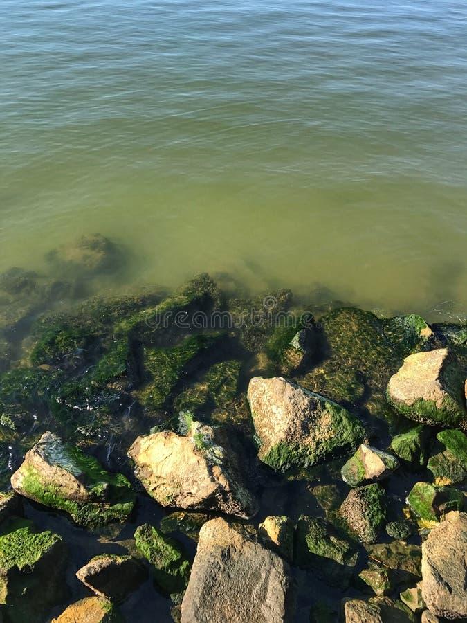 Algae Rocks royalty free stock photos