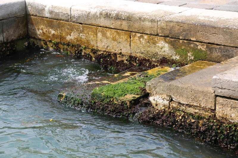 Algae and sea water during high tide in Venice in Italy royalty free stock photography