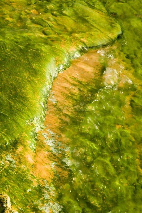 Algas imagens de stock