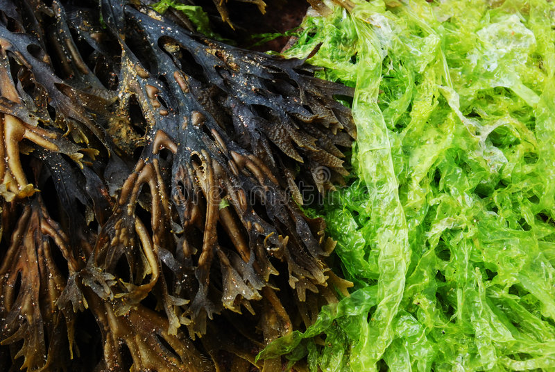 Algas em uma praia fotos de stock royalty free