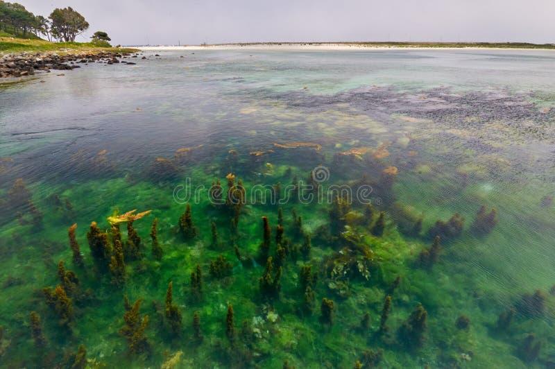 Algas no beira-mar das ilhas de Cies Vigo, Espanha fotografia de stock royalty free