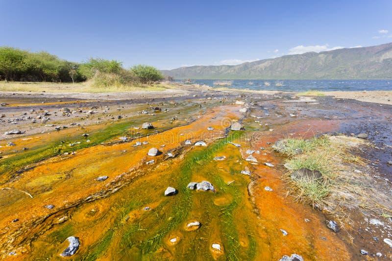 Algas no lago Bogoria, Kenya foto de stock royalty free