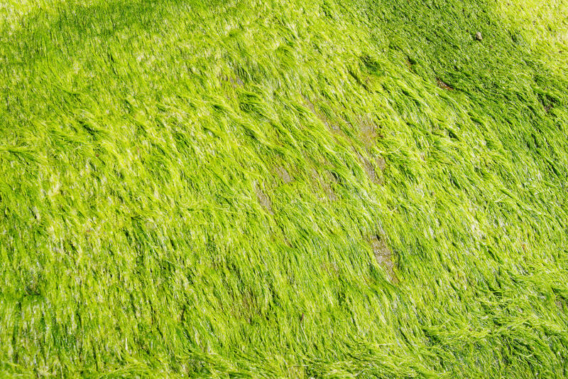 Algas verdes de néon imagens de stock royalty free