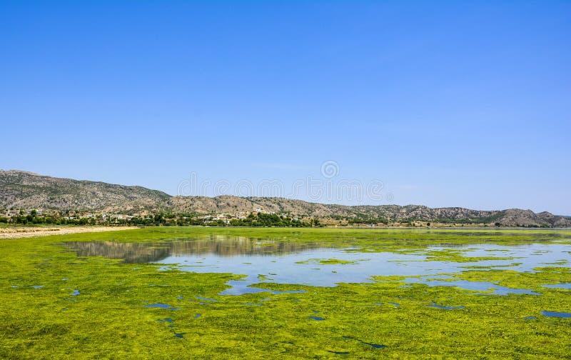 Algas verdes en la superficie del lago Uchali imagenes de archivo