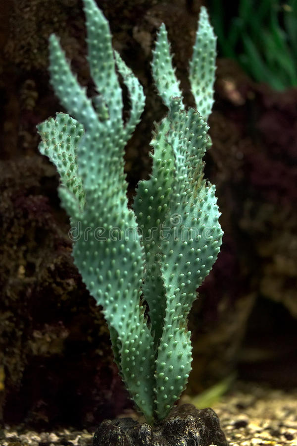 Algas verdes para el acuario fotos de archivo libres de regalías