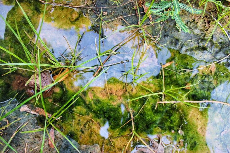 Algas verdes subaquáticas com grama imagens de stock