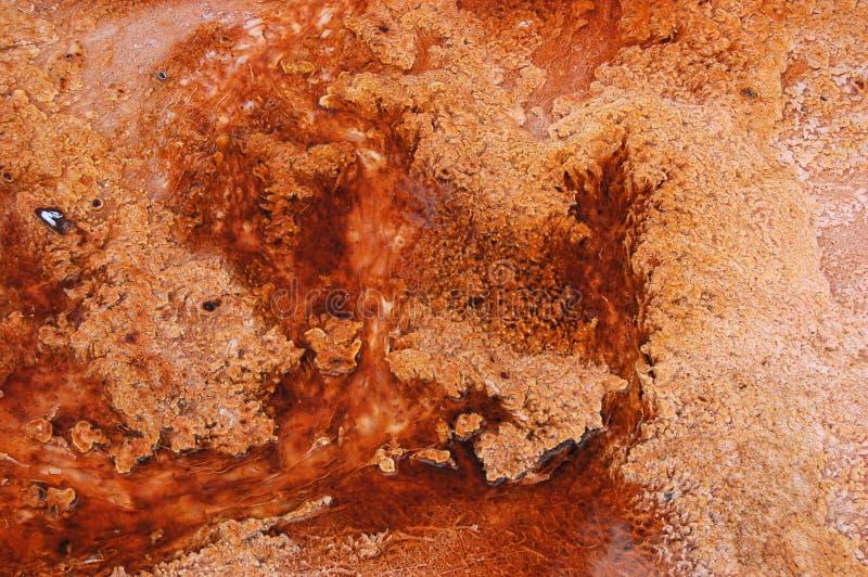 Algas vermelhas de Yellowstone imagens de stock