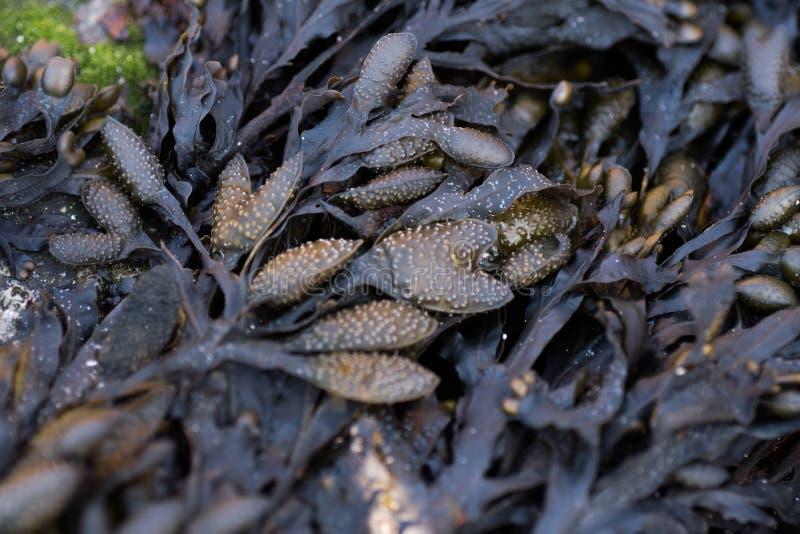 Algas y modelo del musgo imagenes de archivo
