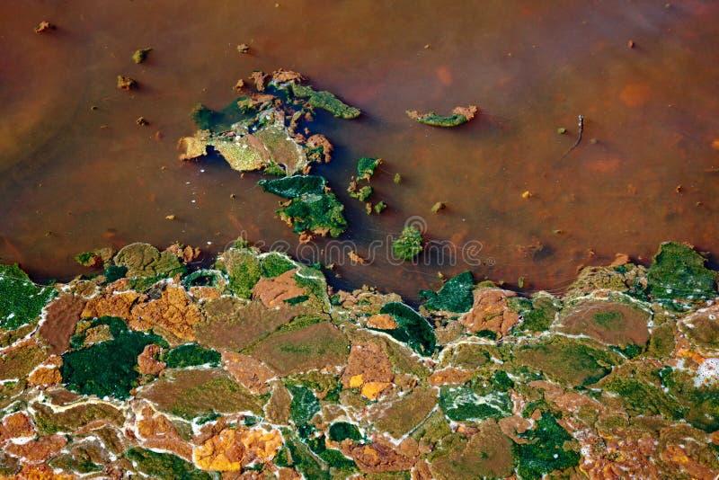 Alge in water stock fotografie