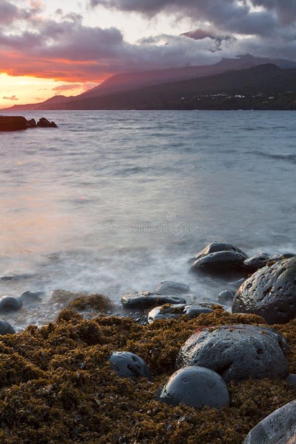 Algen auf den Felsen lizenzfreie stockfotos
