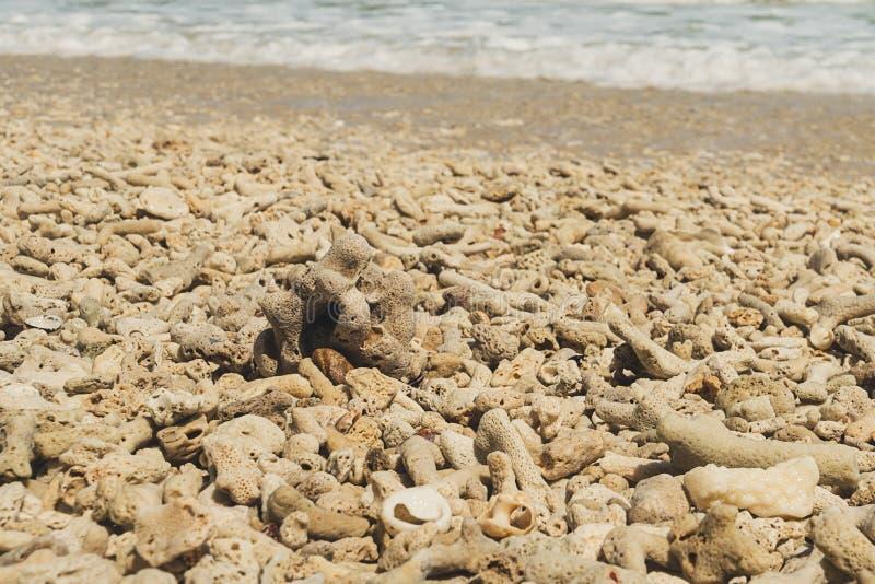 Algen en dode koralen op de Caraïbische kust dichtbij het eiland Saona royalty-vrije stock afbeeldingen