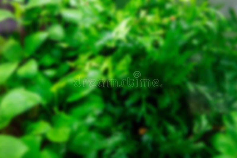 Algen in het aquarium Vage groene achtergrond stock foto