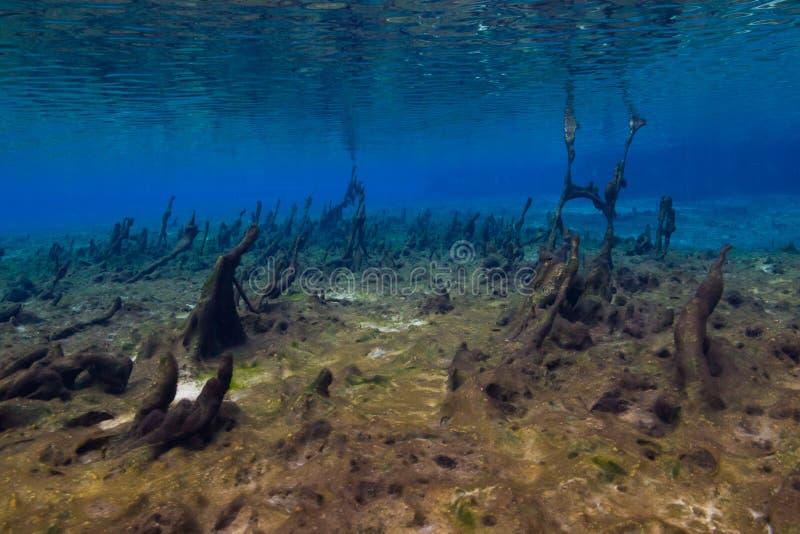 Algen-Matten im Frühjahr lizenzfreie stockfotografie