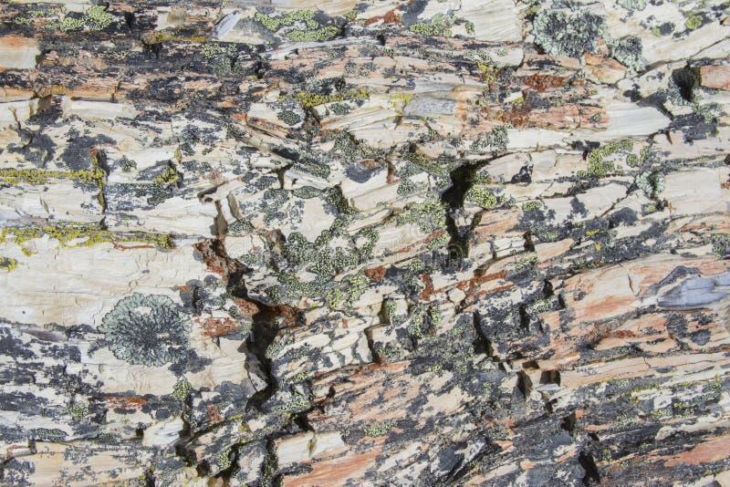 Algen op van angst verstijfd hout, La Leona Petrified Forest, Argentinië royalty-vrije stock foto's