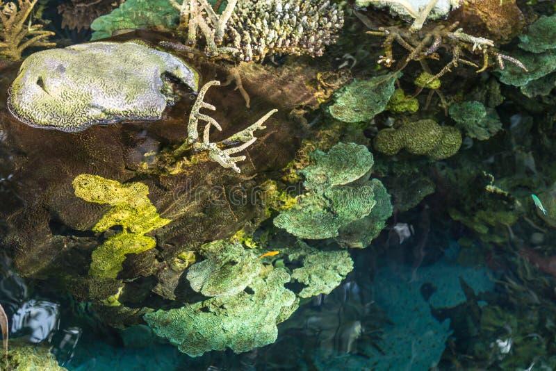 Algen und Blase-Tipp Anemone innerhalb wenigen Sumpfes lizenzfreie stockbilder